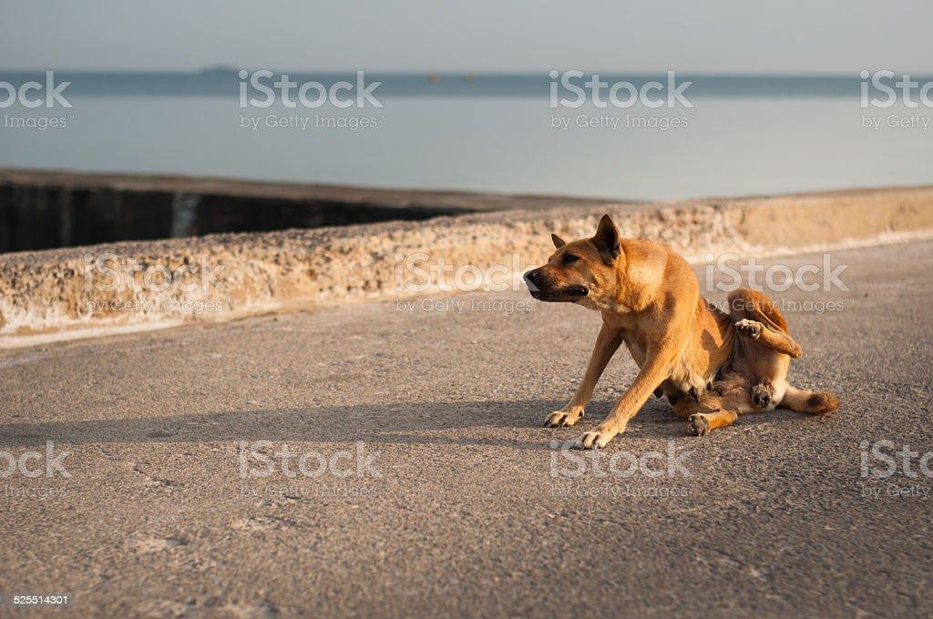 Dog wake up royalty-free stock photo