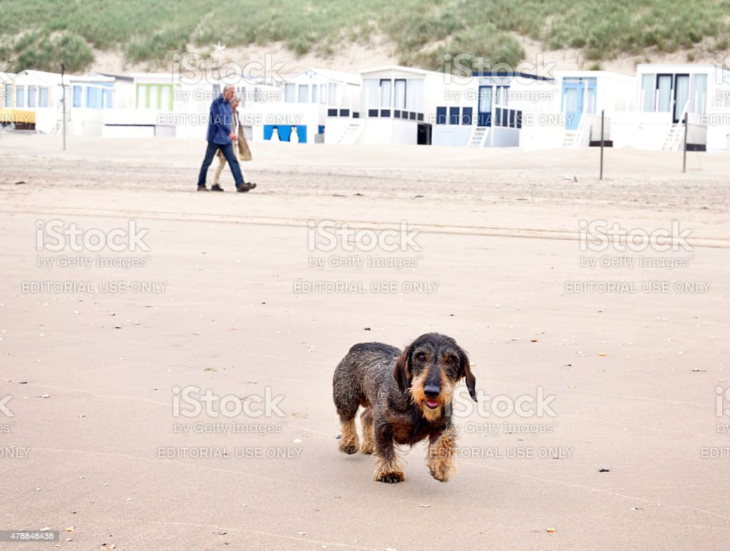 Dog walk on the beach stock photo