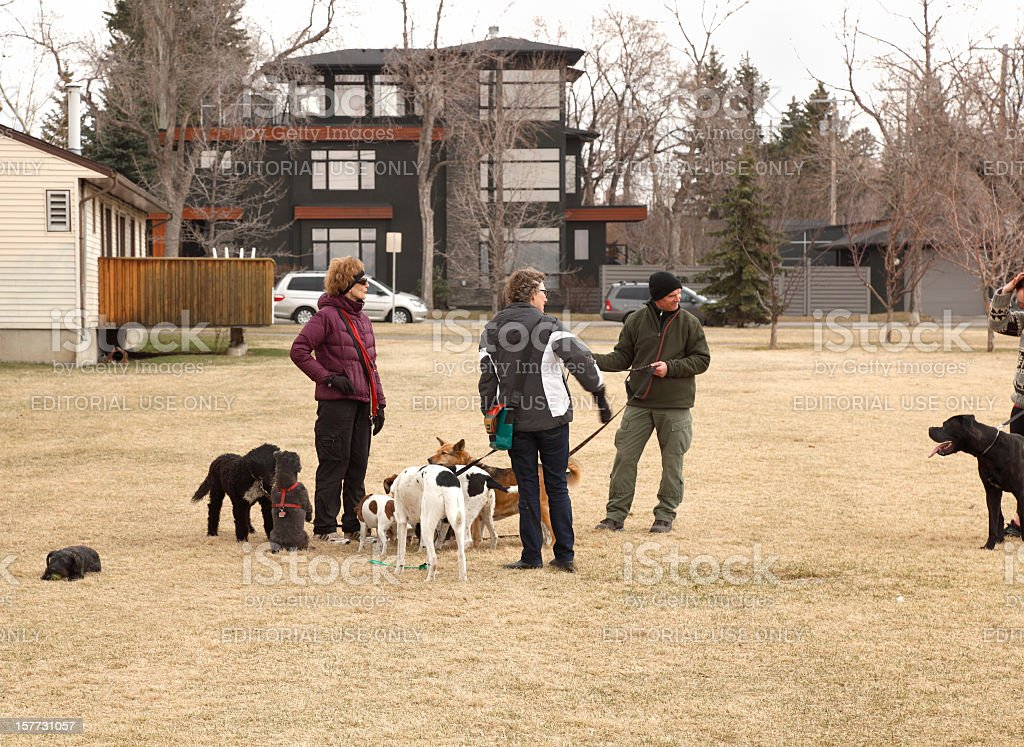 Dog Walkers And Dogs Socializing In The Park royalty-free stock photo