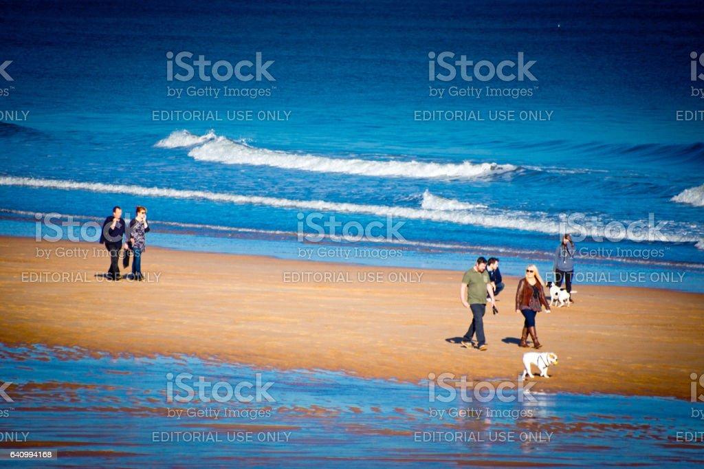 Dog walking on a beach stock photo