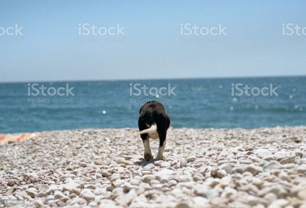 Dog walking on a beach to the sea. Shot on film stock photo