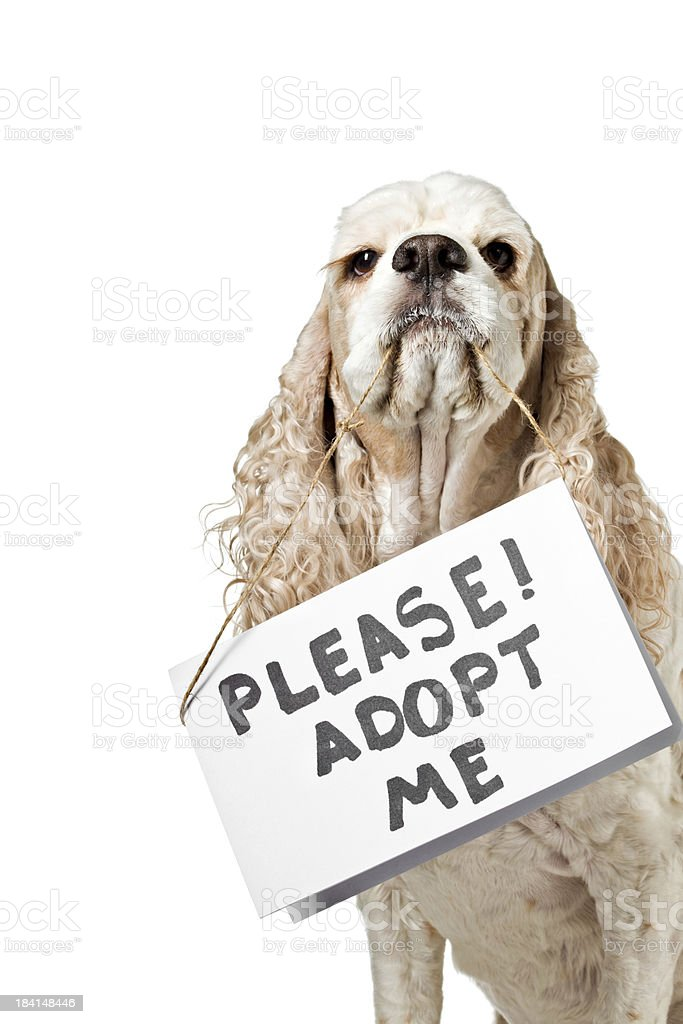 Dog Wants To Be Adopted stock photo