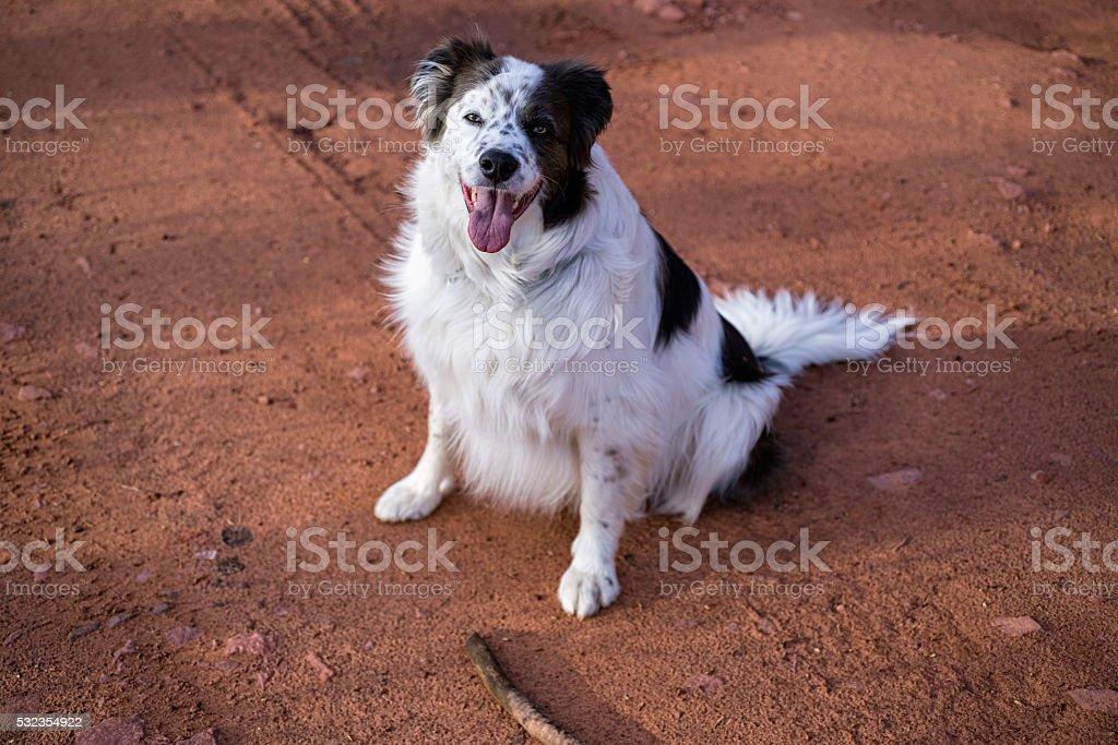 Dog Wants to Fetch Stick stock photo