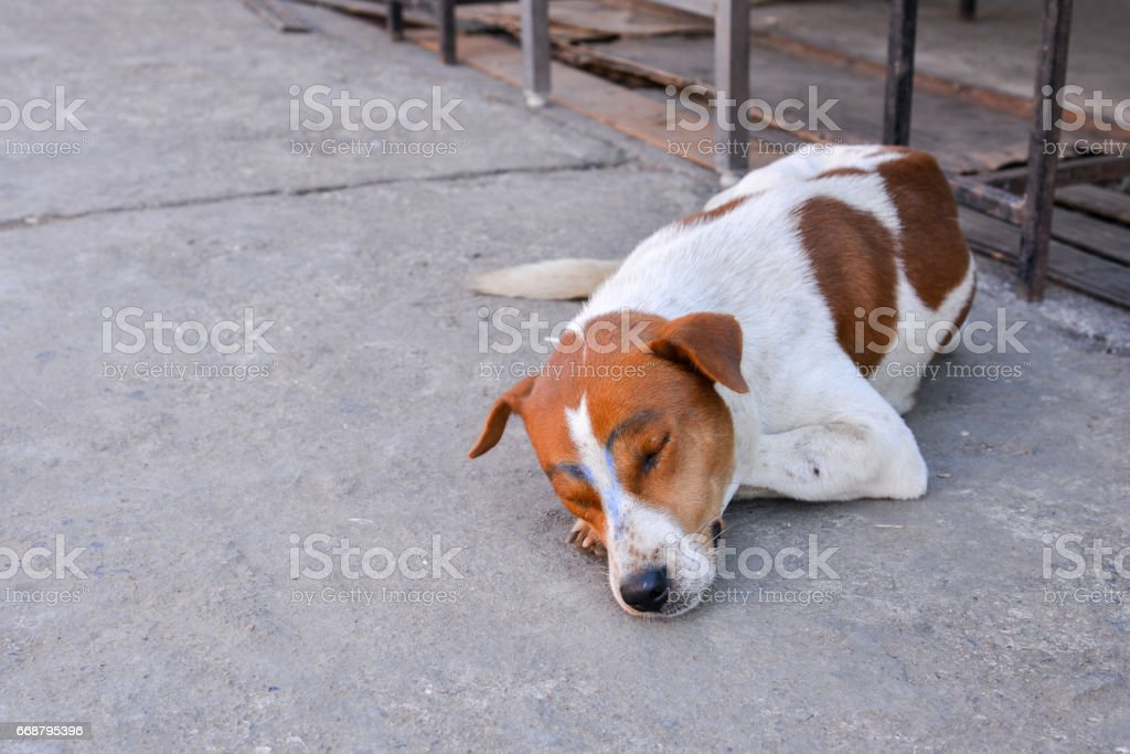 dog was draw on body by human stock photo