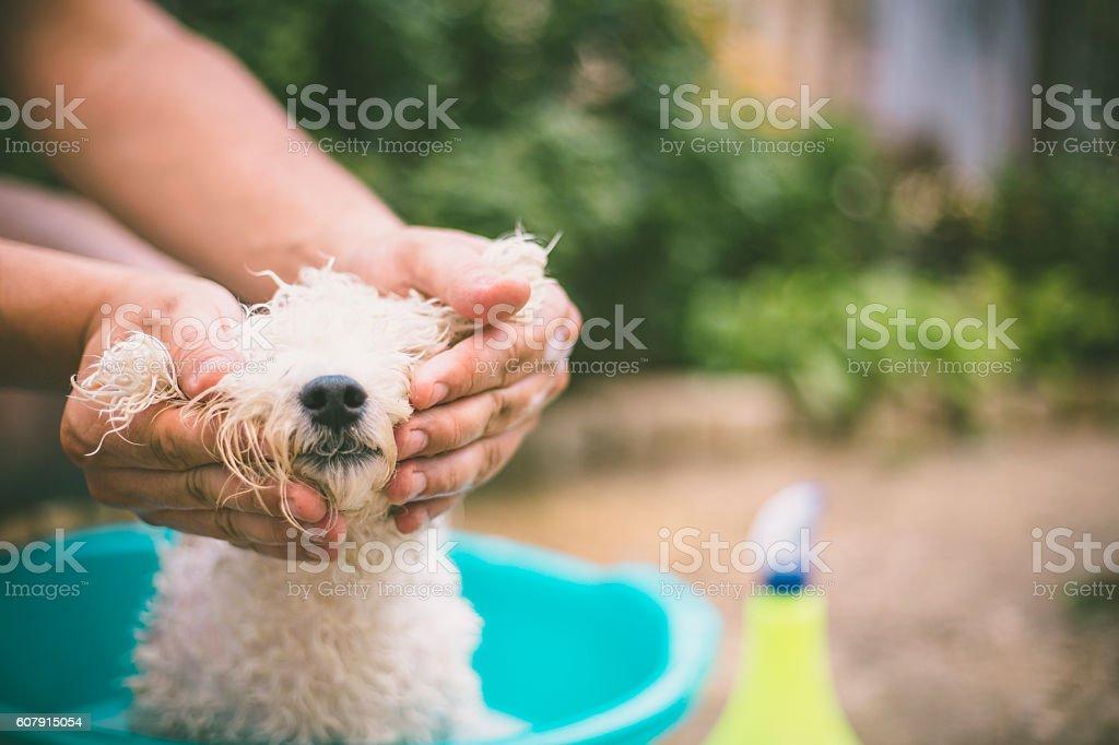 dog washing in a basin stock photo