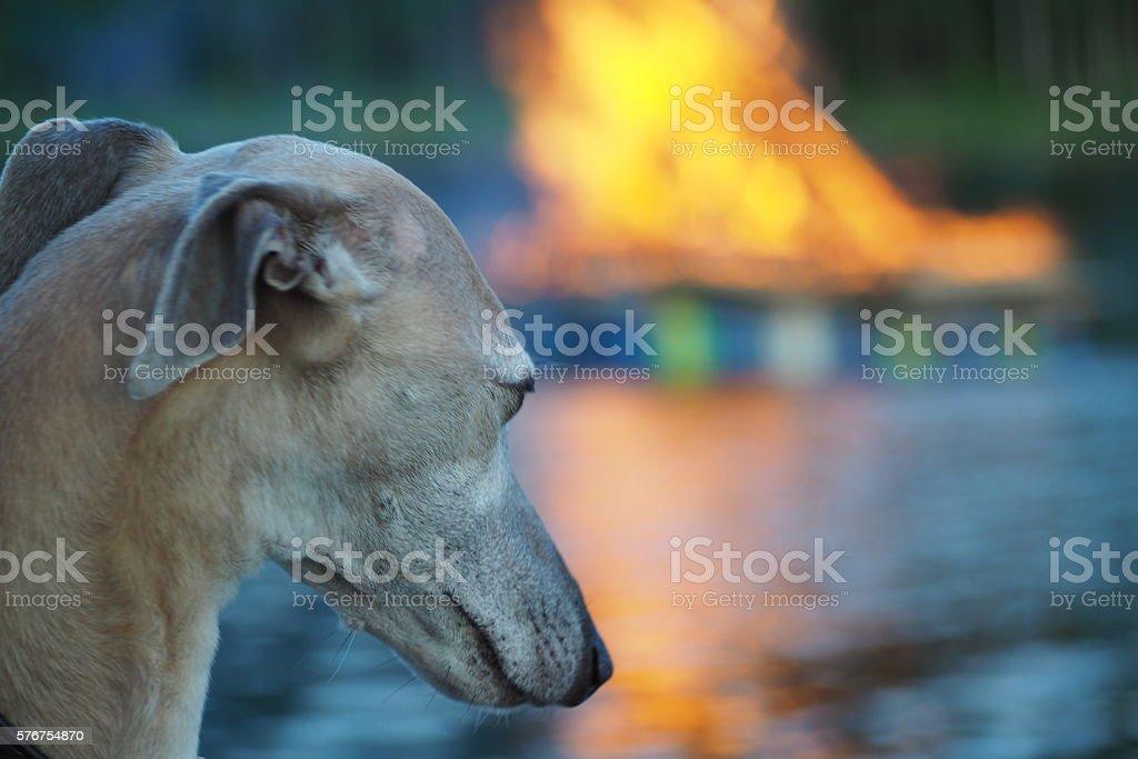 Dog watching a big fire stock photo