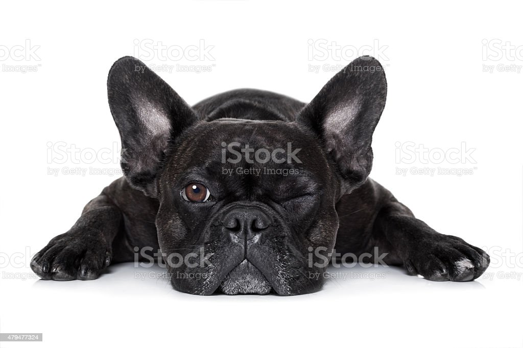 dog watching at you stock photo