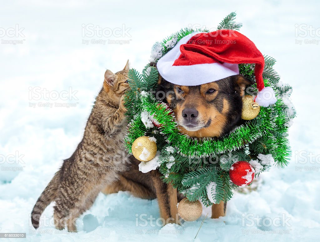 Dog wearing christmas wreath and Santa hat sitting with kitten stock photo
