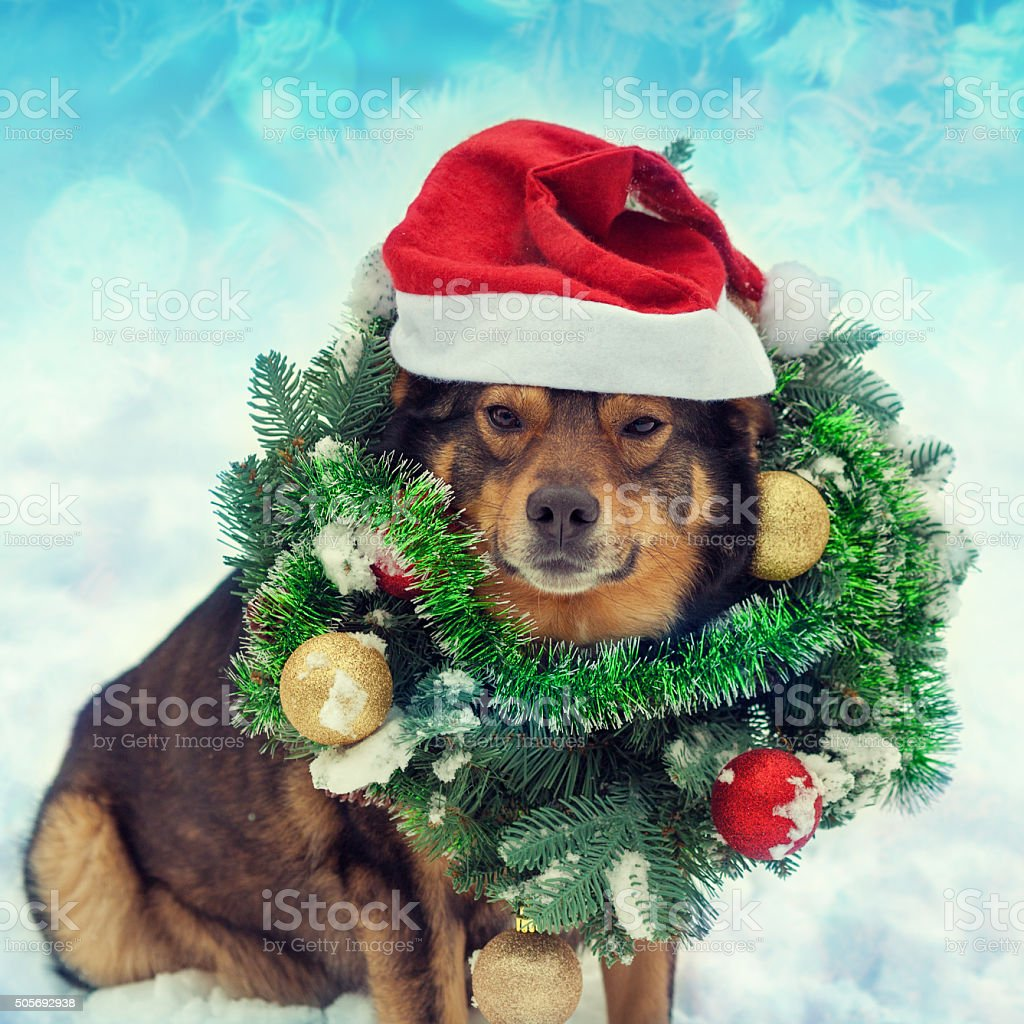 Dog wearing christmas wreath sitting outdoors in snow stock photo
