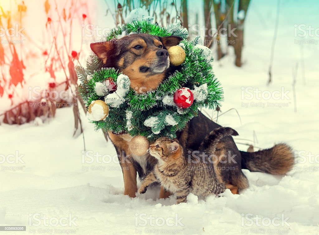 Dog wearing christmas wreath sitting with kitten outdoors in snow stock photo