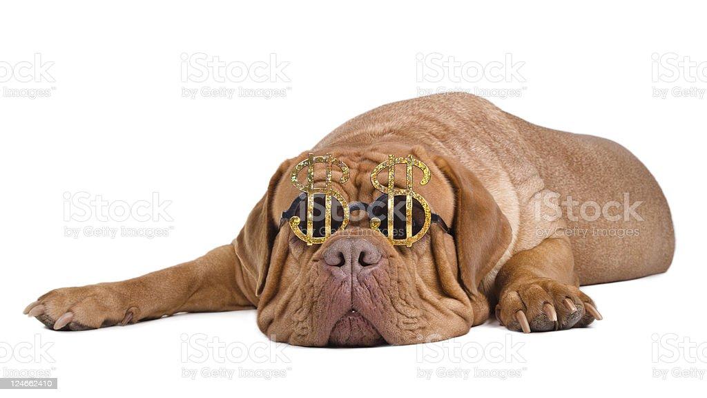 Dog wearing dollar sign glasses stock photo