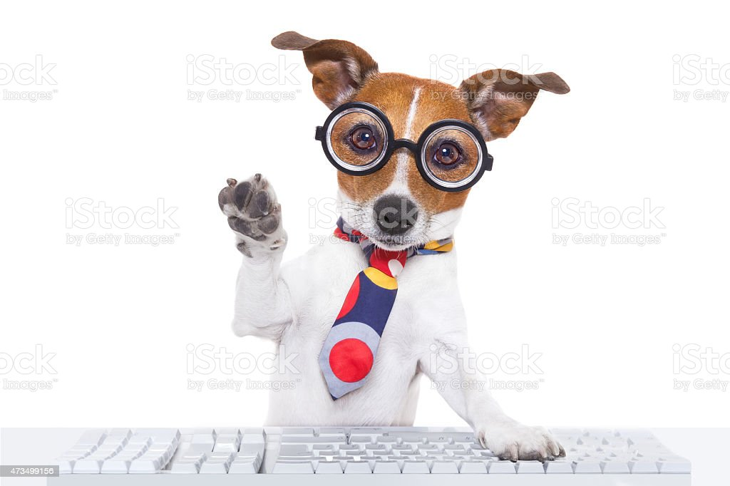 Dog wearing glasses and typing on keyboard  stock photo