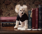 dog wearing glasses pretends to be bookend at library