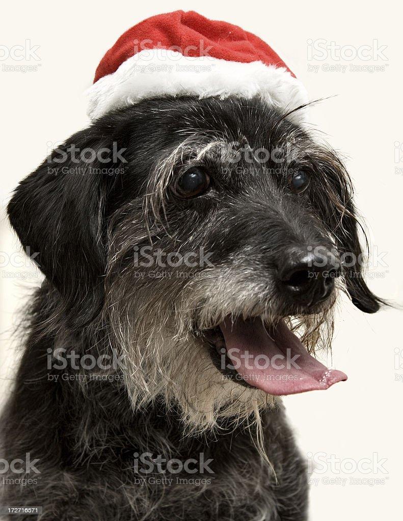 Dog Wearing Santa Hat stock photo
