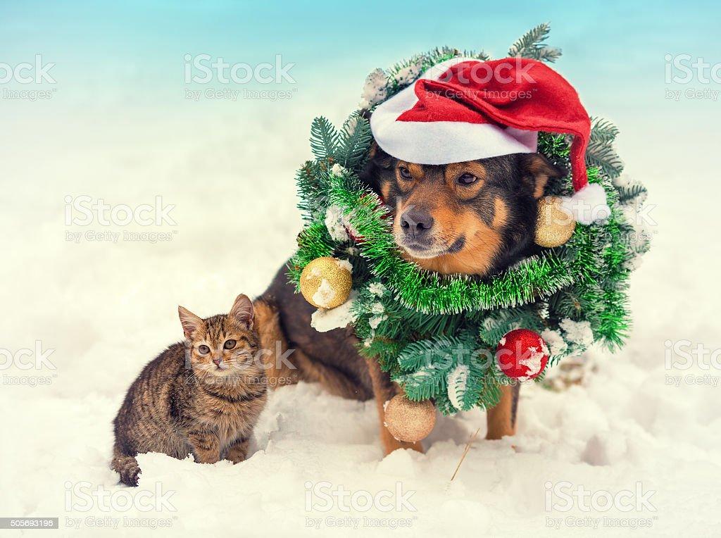 Dog wearing santa hat sitting with kitten in snow stock photo