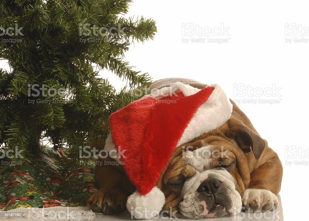 dog wearing santa hat under christmas tree royalty-free stock photo