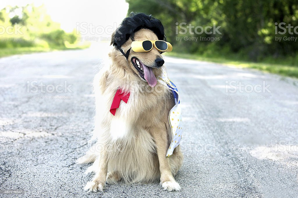 Dog wearing sunglasses and Elvis wig stock photo