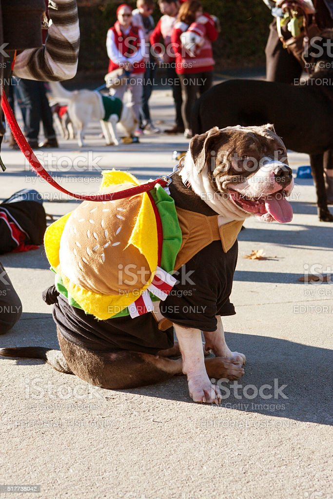 Dog Wears Hamburger Costume For Eclectic Atlanta Parade stock photo