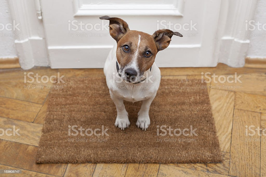 dog welcome home stock photo