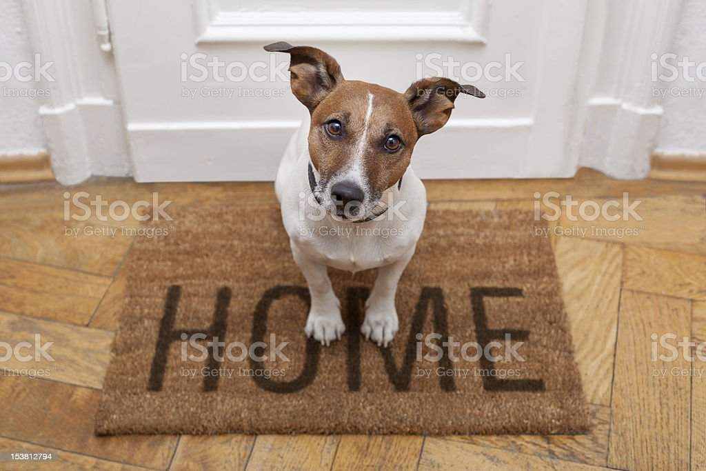 dog welcome home stock photo