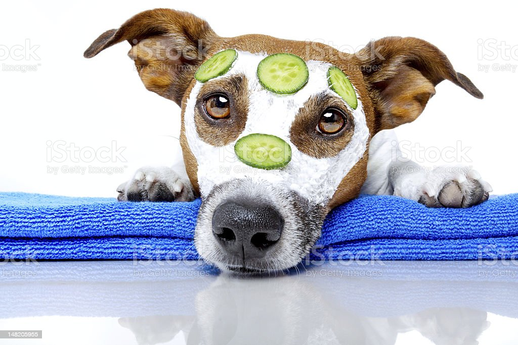 dog with a beauty mask stock photo