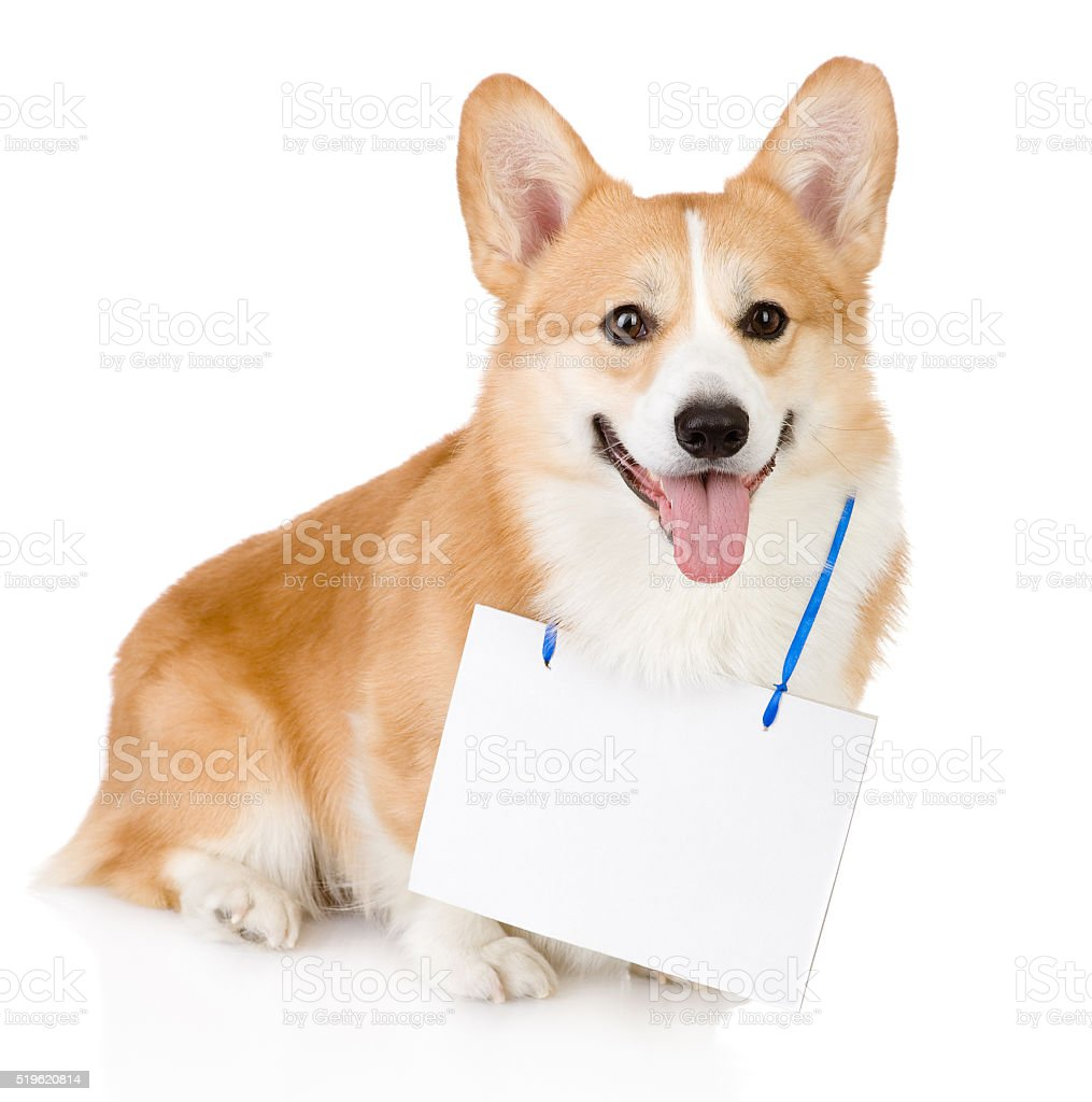 dog with a blank banner hung on the neck stock photo