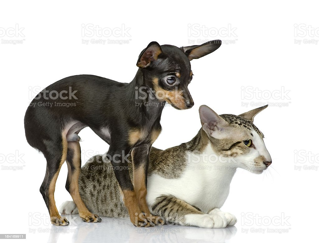 dog with a cat look aside royalty-free stock photo