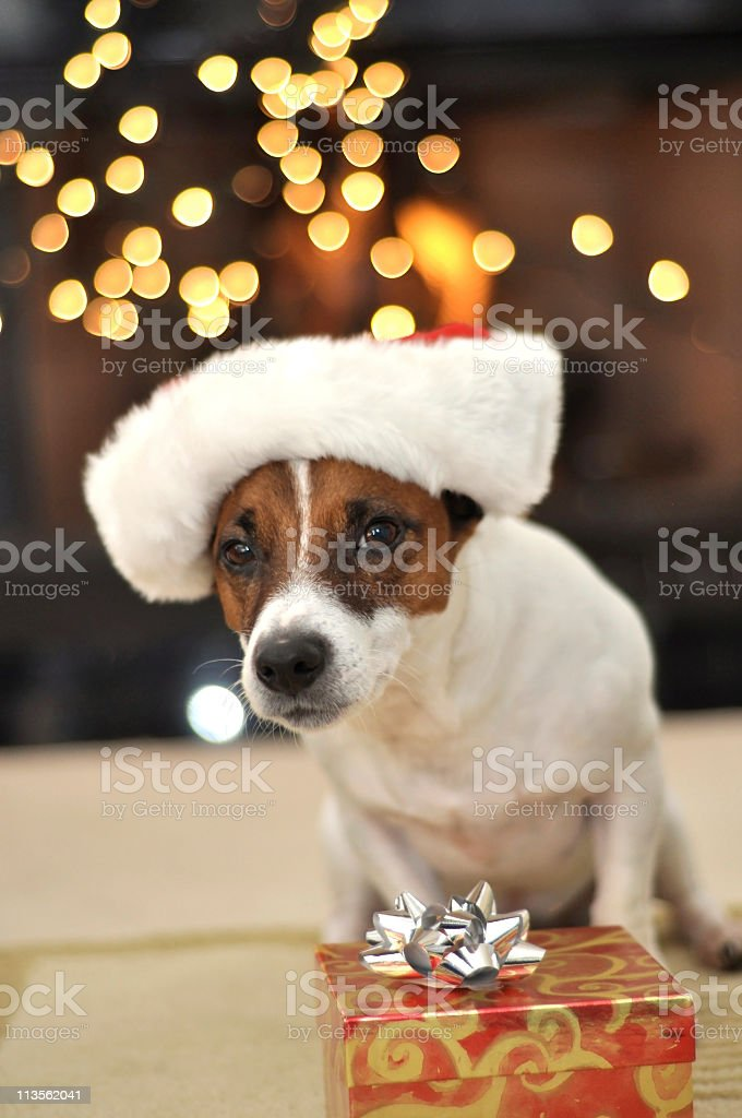 Dog with a Gift stock photo