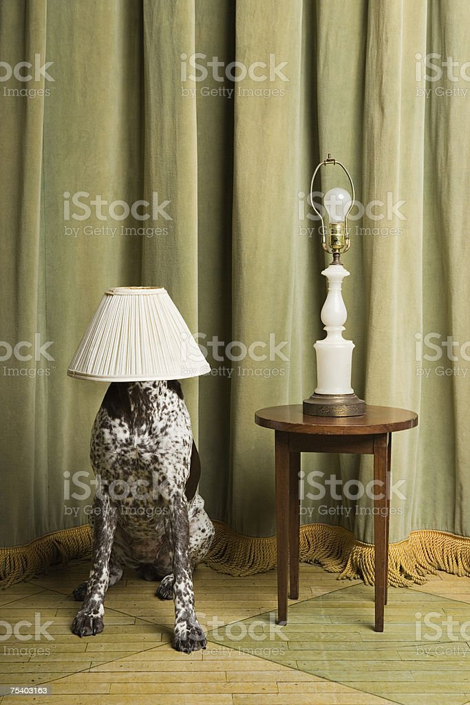 Dog with a lampshade on its head stock photo