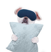 Dog with a mask for sleeping with a pillow.