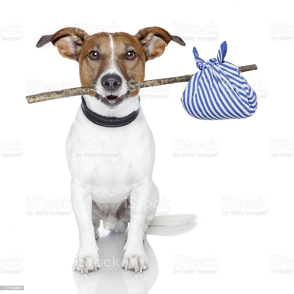 dog with a stick royalty-free stock photo