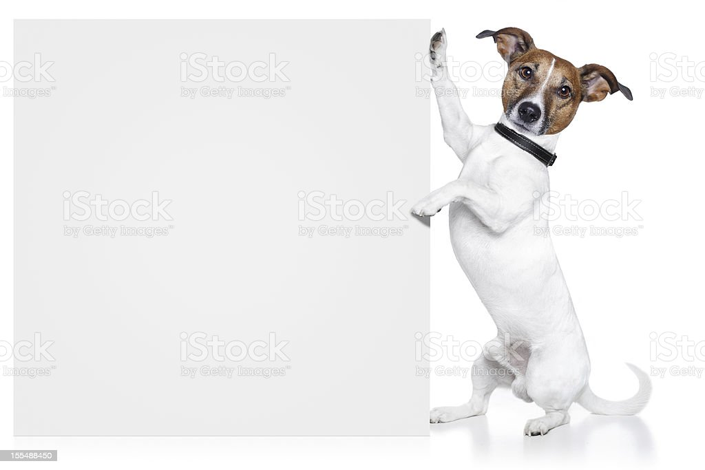 dog with a white banner royalty-free stock photo