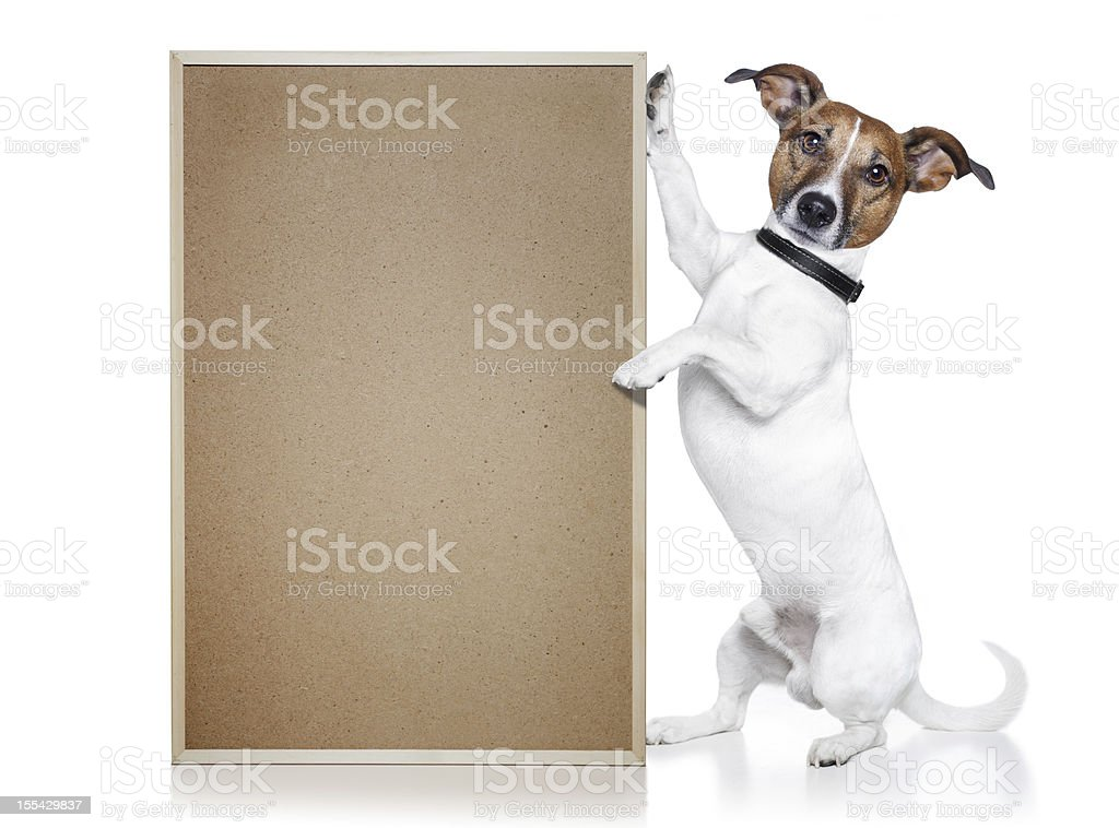 dog with a wood board royalty-free stock photo
