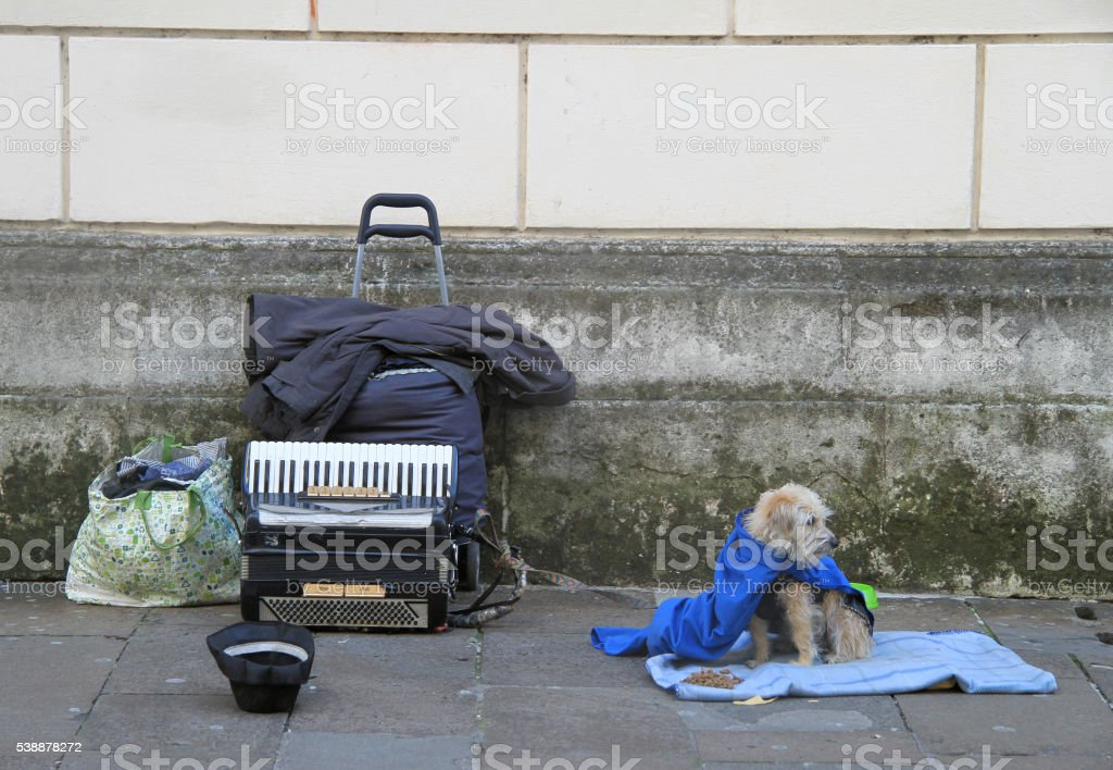 dog with accordion outdoor in Vicenza stock photo