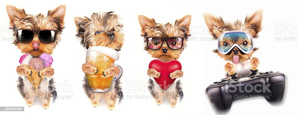 dog with beer, game pad and lover stock photo