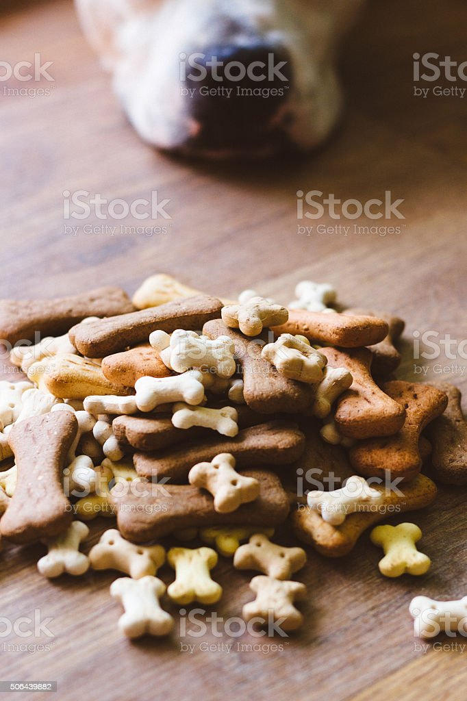 Dog with biscuits stock photo