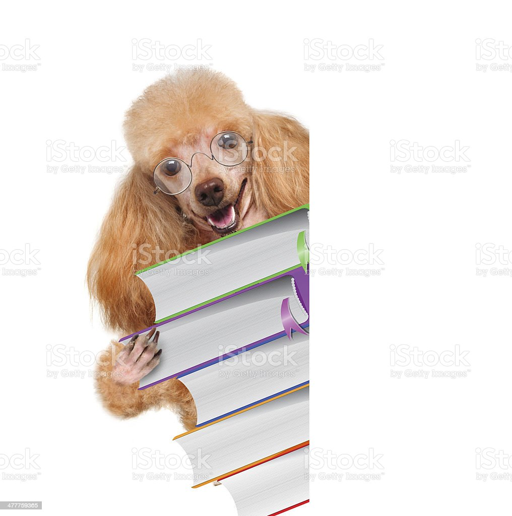 Dog with books over white banners royalty-free stock photo