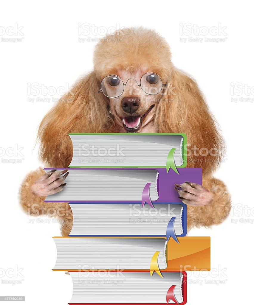 Dog with books royalty-free stock photo