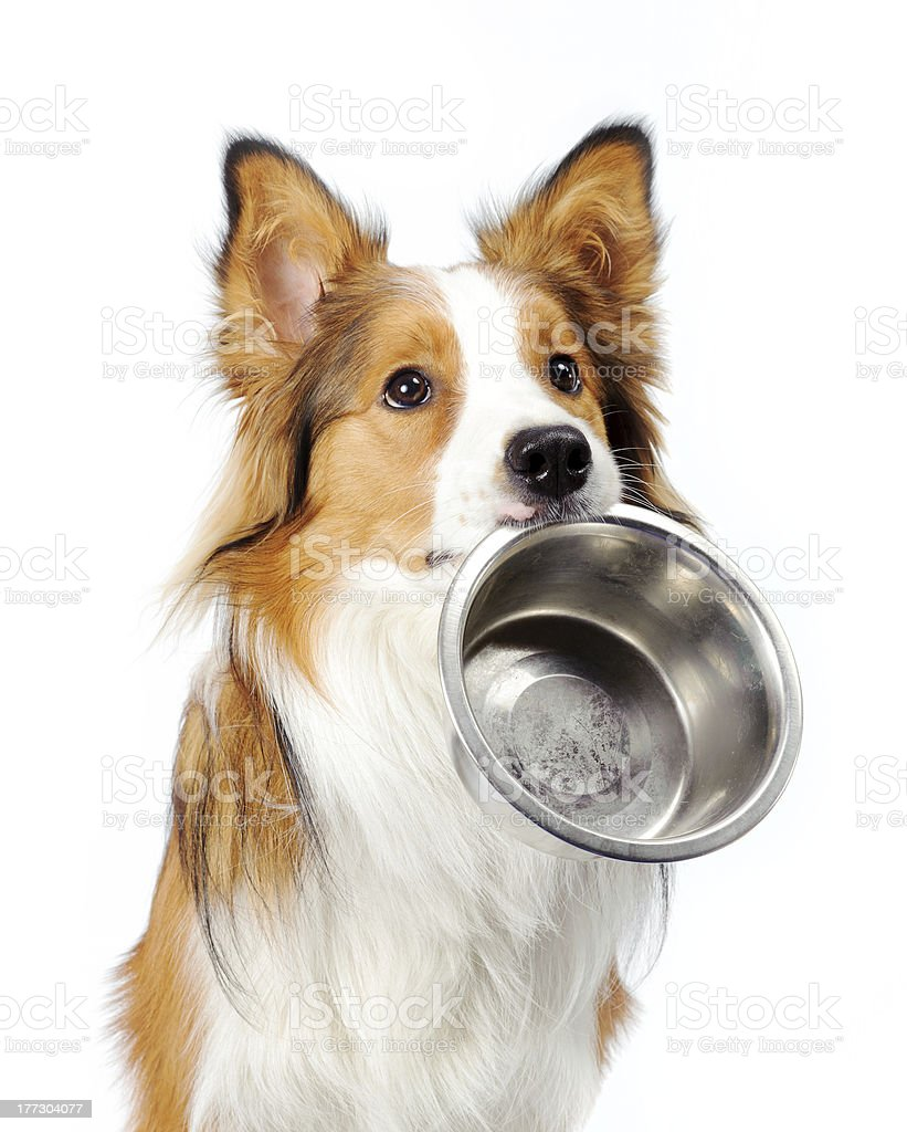dog with bowl stock photo