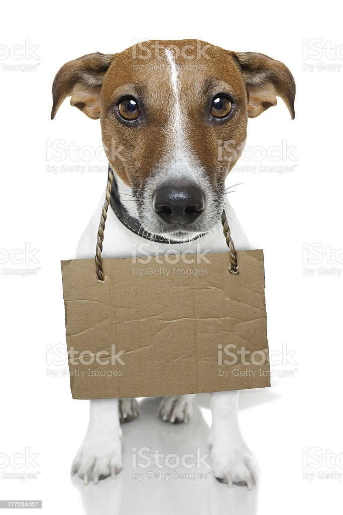 Dog with cardboard stock photo