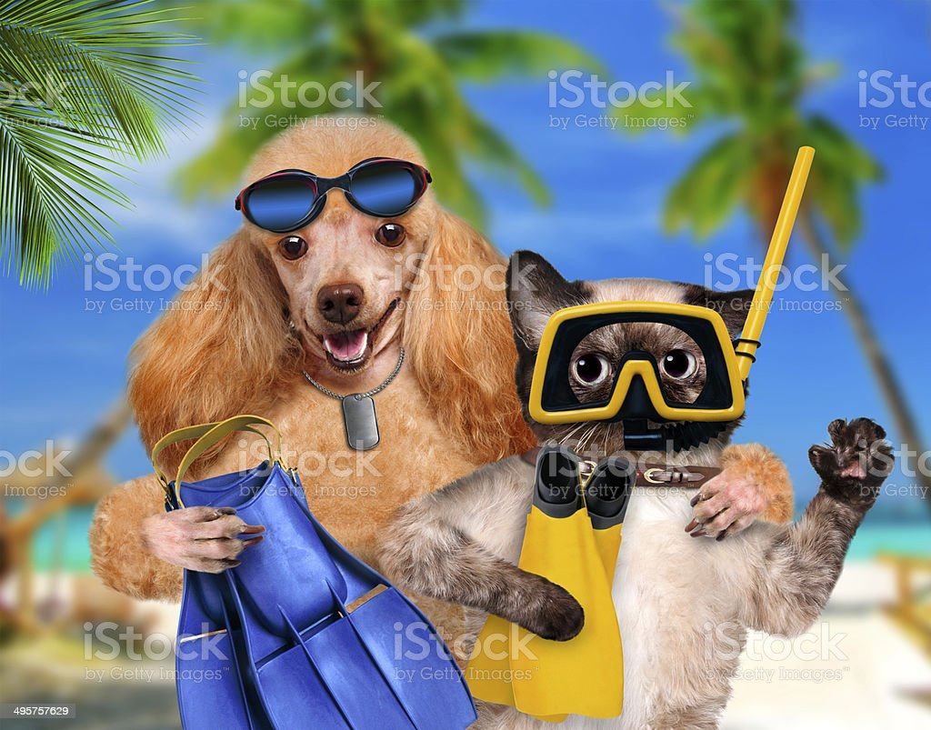 Dog with cat diver. stock photo