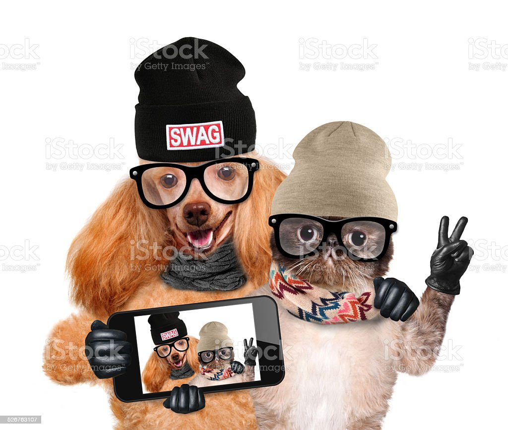 dog with cat taking a selfie together with a smartphone royalty-free stock photo
