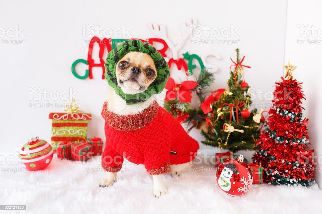 Dog with Christmas stock photo