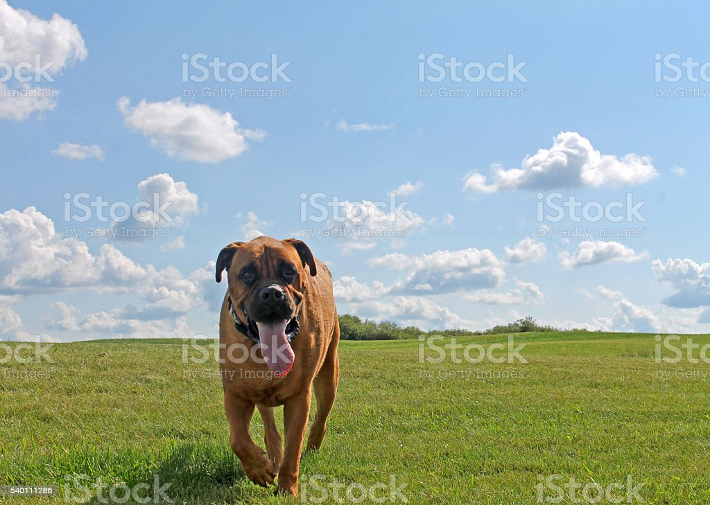 Dog with clouds stock photo
