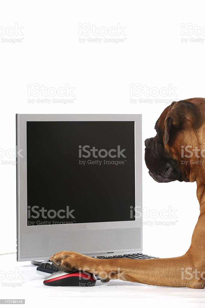 Dog with computer royalty-free stock photo
