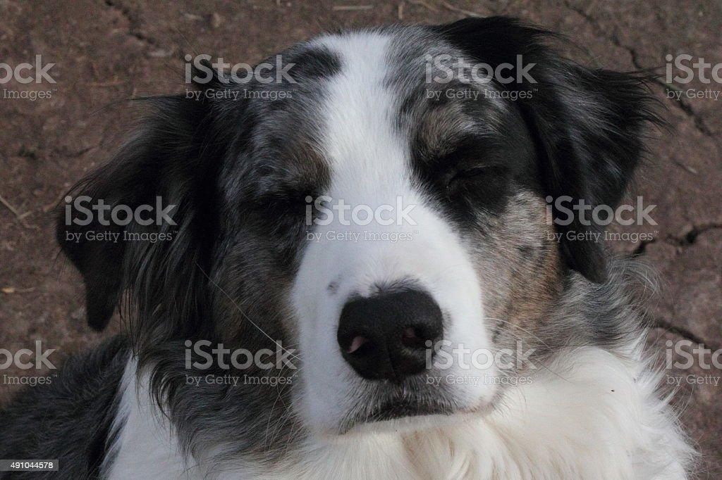 Dog with eyes closed stock photo