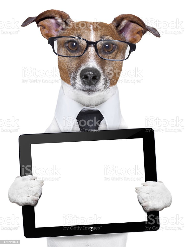 A dog with glasses holding a computer tablet stock photo