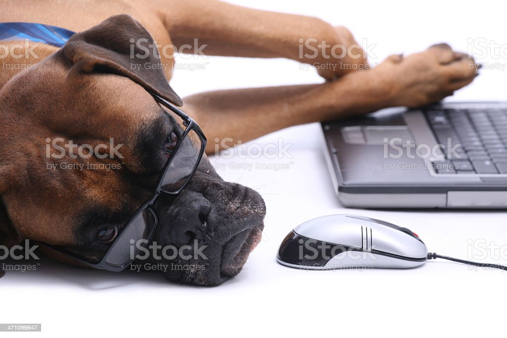 A dog with glasses looking tired while lying near a mouse royalty-free stock photo