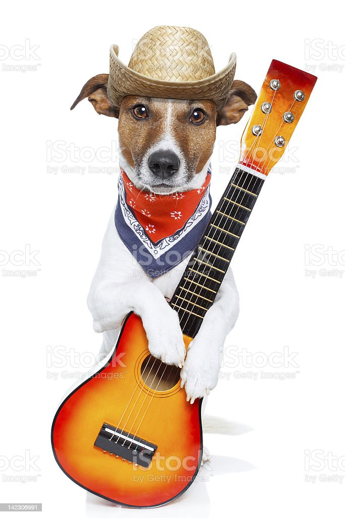dog with guitar royalty-free stock photo