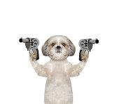 Dog with guns is murderer